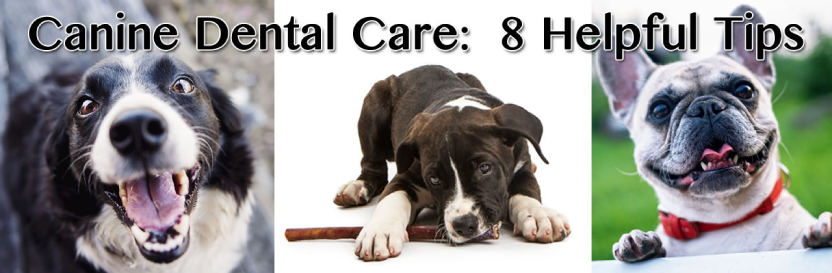 Canine Dental Care